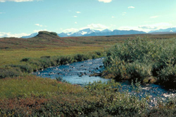 Stream flowing through arctic tundra