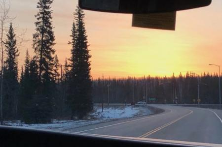 Boreal forest on the drive to UAF