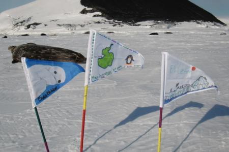 Blubber flags