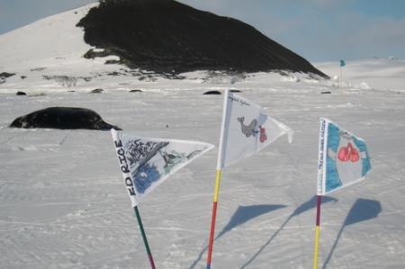 Lung flags