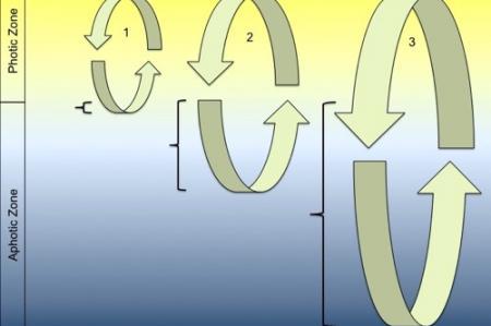Critical Depth Hypothesis diagram