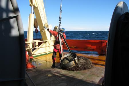 Marine tech Ross Hein, with a geologic dredge.