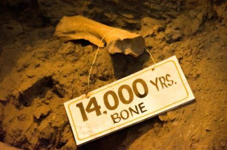 Old bone