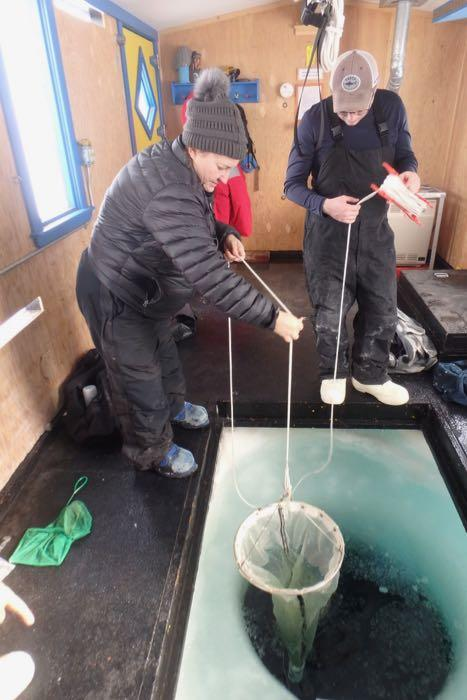 Pulling up the plankton net