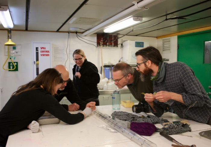 Scientists observe a polychaete worm found in a sediment sample