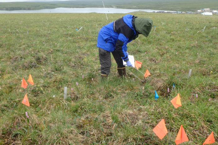 Placing the flag markers on the quadrats