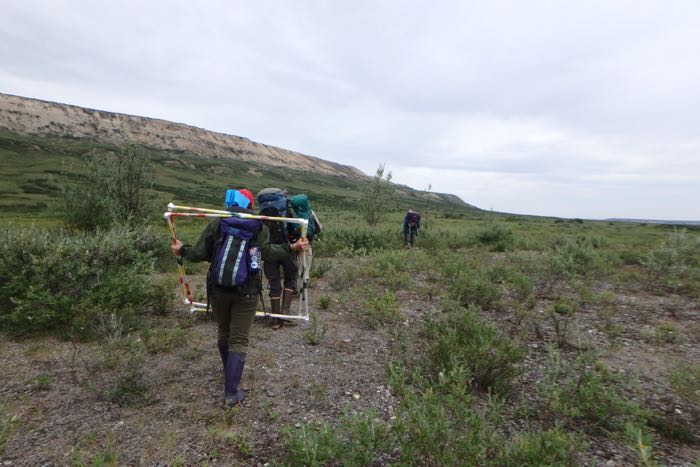 Researchers hike equipment out to field location from road