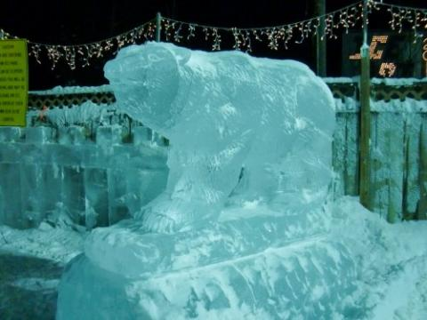 Grizzly at Ice Park