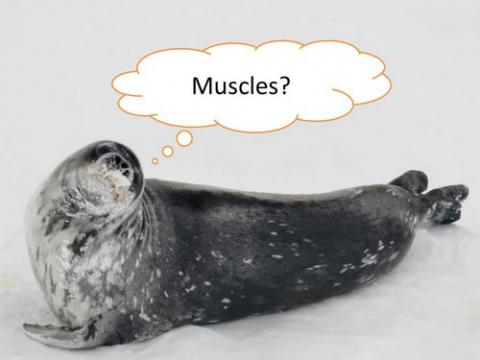 What do you know about muscles?
