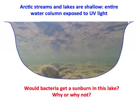 Arctic water column