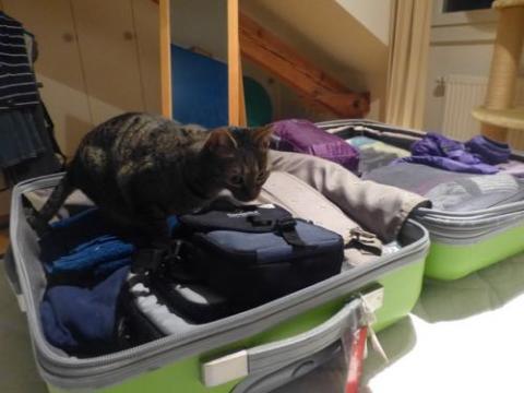 Venus in suitcase
