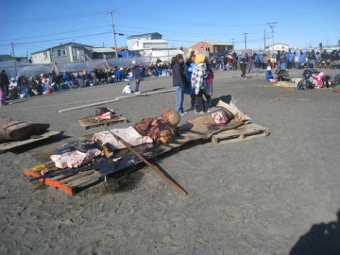 Nalukataq Festival