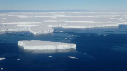 Icebergs vs. sea ice