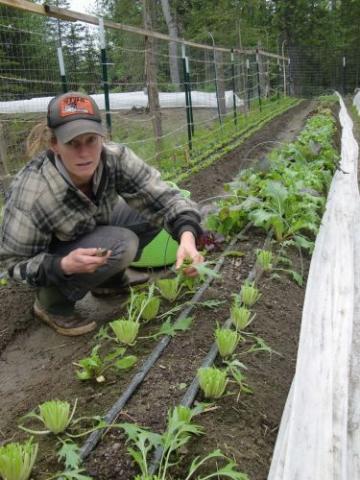 Allie harvesting some greens for market.