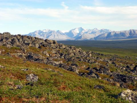 Marmot View of the Brooks Range
