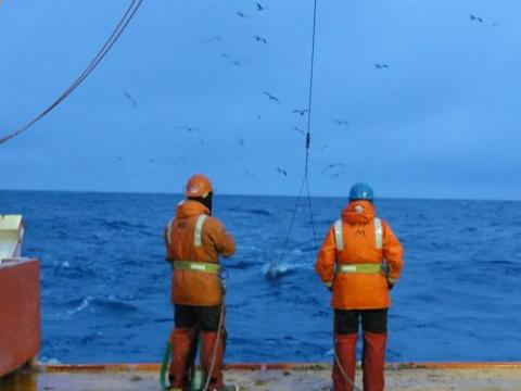 Trawling for icefishes in the Southern Ocean