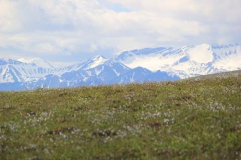 Tundra and Brooks Range