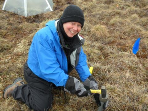 Ms. Steiner taking a soil core at the Snowmelt project plots