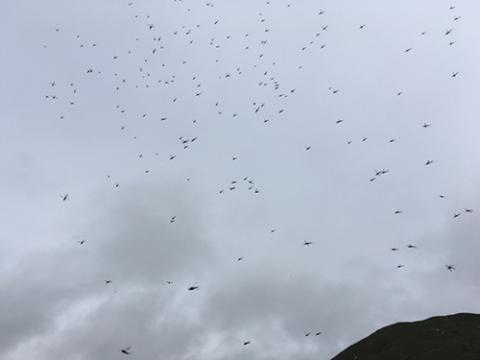 Mosquitos in the Sky