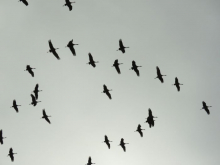 Birds silhouetted against the sky