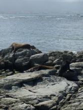 Sea Lions at Kaikoura