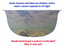 Arctic water column