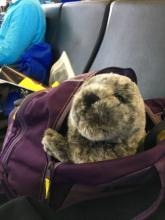 Seal pup in backpack