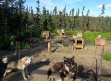 Dog Yard at Stampede Road