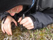Slicing Some Lichen