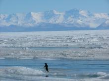 Royal Society Range as seen from McMurdo.