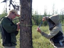 Mike Loranty (right) takes a tree core while Seth Spawn measures the tree
