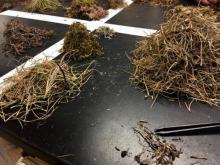 Midpoint of sorting biomass