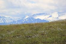 Tundra and Brooks Range
