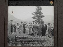 Interpretive sign comparing growth of a spruce tree near Savage River Campground