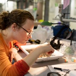 Kelly Uhlig, a graduate student, looks at a van Veen sample under the microscope at the Healy lab.