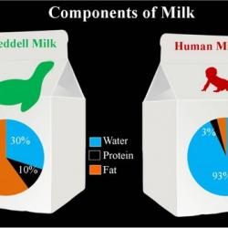Weddell and human milk