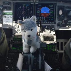 Husky in the cockpit