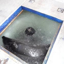 Seals at the fish hut