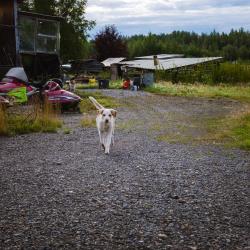 Dog in Nikolai