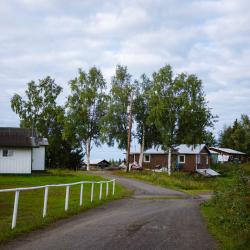 Trees in Nikolai