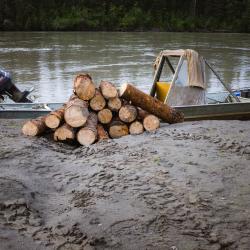 Logs in Nikolai