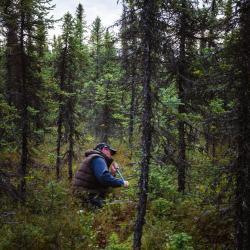 Sasha in black spruce forest