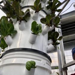 Hydro planter