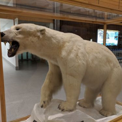 taxidermied polar bear