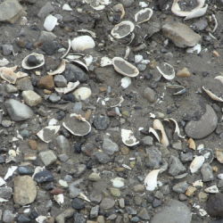 Sea shells in the sediments.