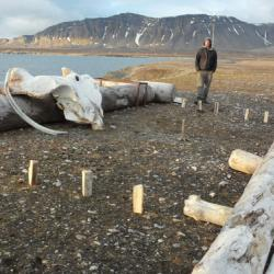 Kubb, a Norwegian game.