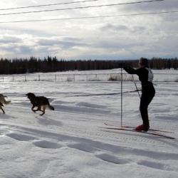 Dog Skijoring