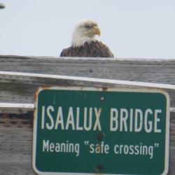 Walking bridge in Unalaska