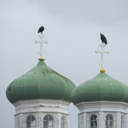 Eagles on Russian Orthodox Church