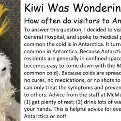 Kiwi was wondering